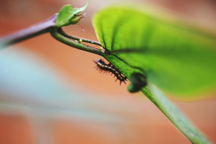Insect One Animal Animal Themes Close-up Animals In The Wild No People Nature Plant Animal Wildlife Outdoors Frommygarden Green Beauty In Nature