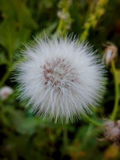 Flower Beauty In Nature Softness Freshness Close-up Beauty Flower Head Beauty In Nature Plant