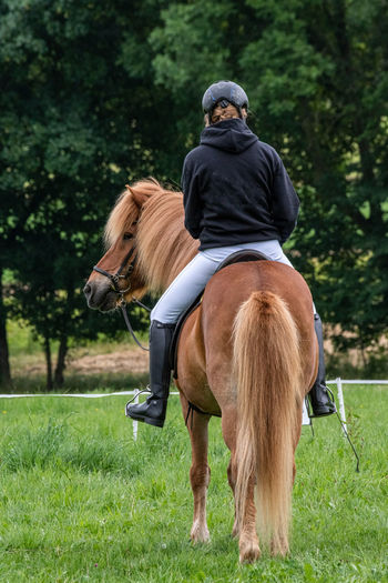 Icelandic Horses Show in LWL Open Air Museum Detmold Icelandic Horse Riding Horseback Riding Mammal Domestic Animals Domestic Horse One Animal Pets Plant Vertebrate Grass Full Length Rear View Tree People Green Color Day Herbivorous Outdoors