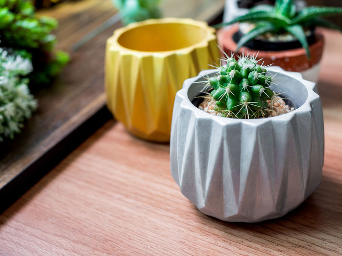 Colorful geometric planters. Painted concrete planters for home decoration Table Potted Plant Green Color No People Close-up Plant Focus On Foreground Wood - Material Succulent Plant Freshness Food And Drink Indoors  Still Life Cactus Food Healthy Eating Wellbeing Growth Nature Day Houseplant Glass Concrete Geometric Planter