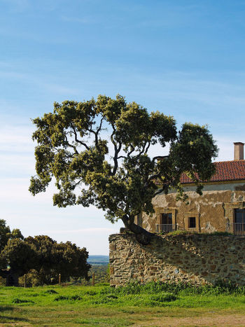 Architecture Building Exterior Built Structure Church Day Environment Force Grass Hermitage Nature Nature Nature_collection No People Outdoors Power Powerful Quercus Quercus Ilex Sky Stone Wall Tranquil Scene Tranquility Tree Wall