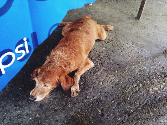 High angle view of dog sleeping on ground