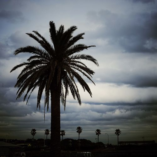 Silhouette date palm tree against cloudy sky