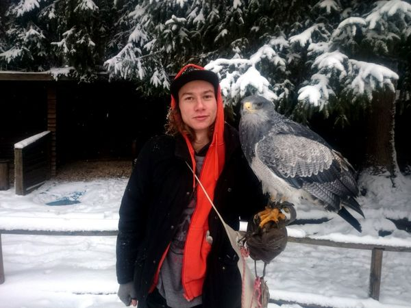 Winter Snow Cold Temperature Hawk Portrait Looking At Camera Front View Animal Themes Outdoors Day Snowing Frozen
