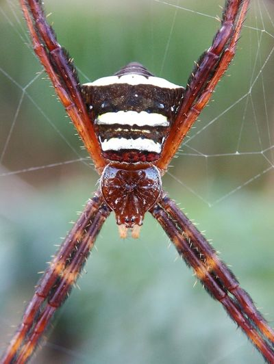 mountain spider