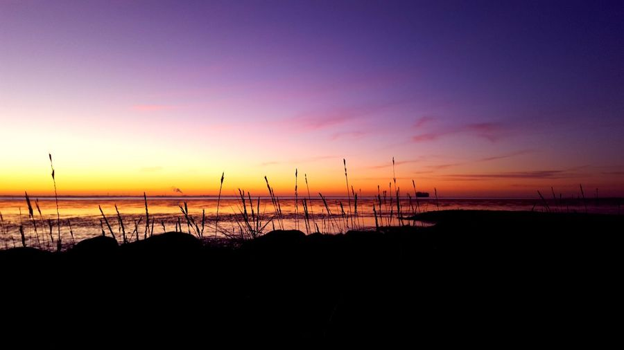 Silhouette Of Reeds By Sea Against Sky During Sunset