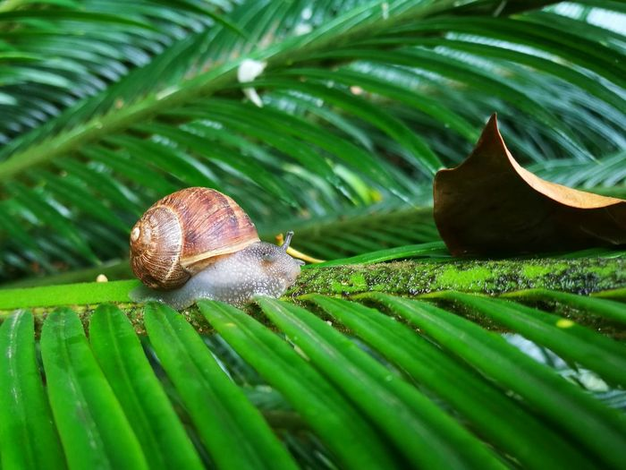 Leaf Green Color Snail Nature Close-up Beauty In Nature Animal Themes Fragility Day Outdoors Rainy Days Water No People Green Color Palm Tree Palmfrond Frond Naturephotography Plant