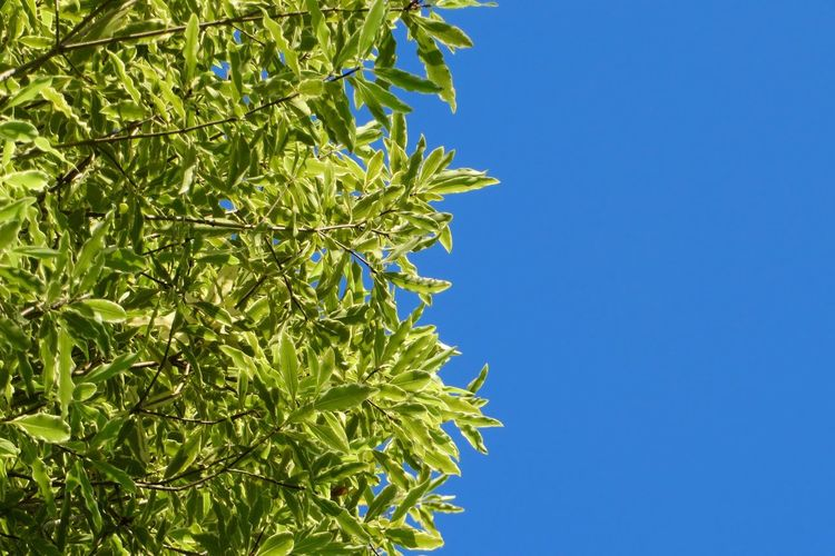 Green and Blue Growth Plant Sky Low Angle View Tree No People Green Color Blue First Eyeem Photo
