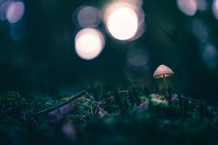Close-Up Of Mushroom Growing In Forest At Night