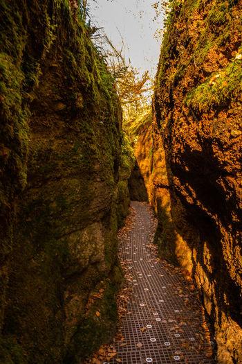 Narrow footpath along trees