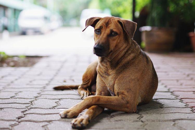 Portrait of dog sitting on footpath