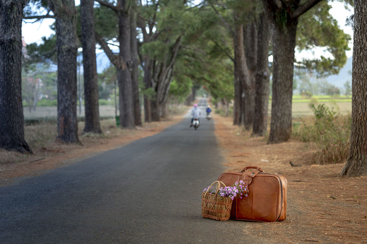 Old suitcase and bouquet of daisies flowers on the road. Countryside Ancient Autumn Beauty Bouquet Cheerful Close-up Color Image Concepts Cute Day Decoration Design Flower Happiness Hat Nature No People Non-urban Scene Old Outdoors People Photography Road Straw Suitcase Summer Sunny Textured  Travel Trees Vietnam Transportation Tree Trunk Plant Trunk