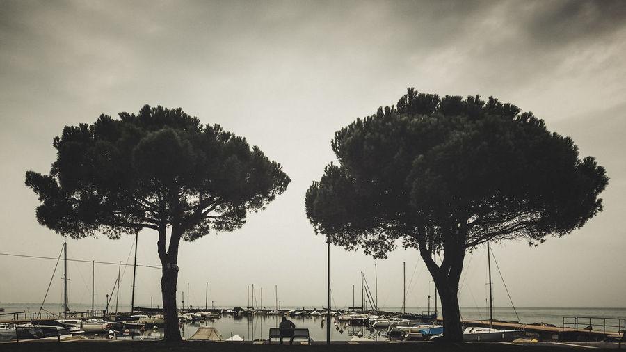 Silhouette of trees on seashore