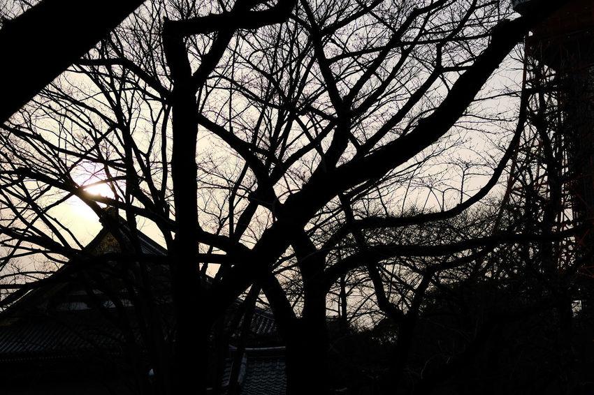 増上寺/Zojoji Architecture Building Exterior Built Structure Fujifilm FUJIFILM X-T2 Fujifilm_xseries Japan Japan Photography Temple Temple - Building Tokyo X-t2 Zojoji Zojojitemple 増上寺