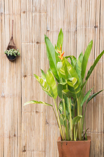 Close-up of plant growing on wood
