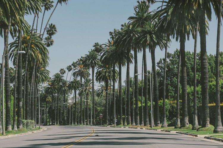 Palm trees on both sides of the road Clear Sky Day Growth Nature No People Outdoors Palm Tree Road Tree Tree Trunk