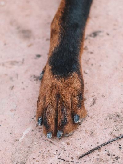 K9 Dog Canine Animal Animal Themes Domestic Animals Pets Domestic One Animal Mammal Vertebrate No People