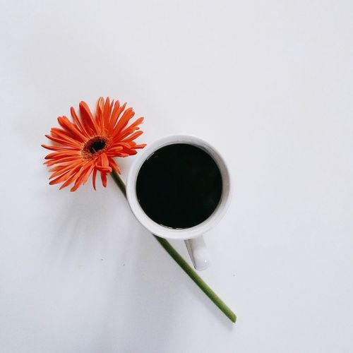 High angle view of black tea and flower