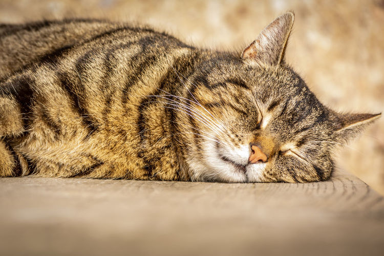Close-Up Of Cat Sleeping