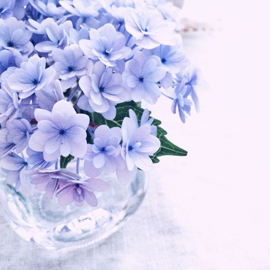 Floral Flower Fragility Purple Petal Flower Head Beauty In Nature Freshness Nature No People Close-up White Background Indoors