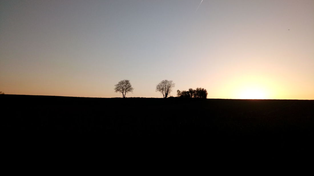 Tree Sunset Clear Sky Silhouette Rural Scene Sky Landscape
