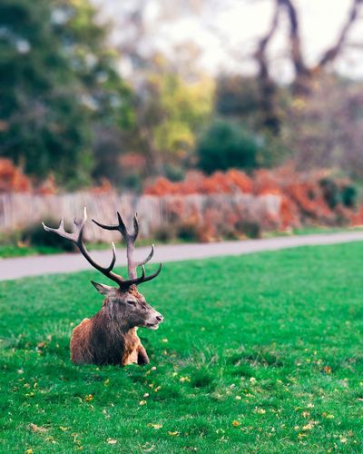 Hanging Out Createexploreandtakeover Watching Deer Deer Natgeo Animal Photography Forbes CreateExplore EyeEm Best Shots Photooftheday Check This Out Ipjonephotoghraphy Panasonic Lumix Follow4follow OpenEdit Autumn 2015 Deceptively Simple