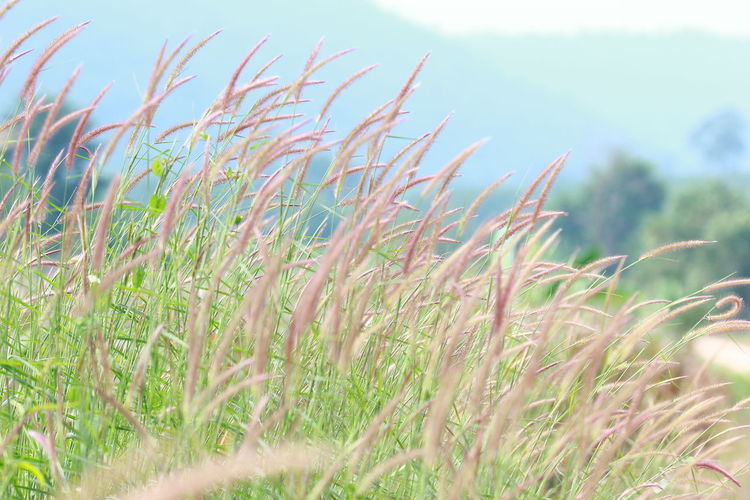 Beauty In Nature Close-up Day Grass Green Color Growth Land Nature No People Outdoors Plant Selective Focus Tranquility