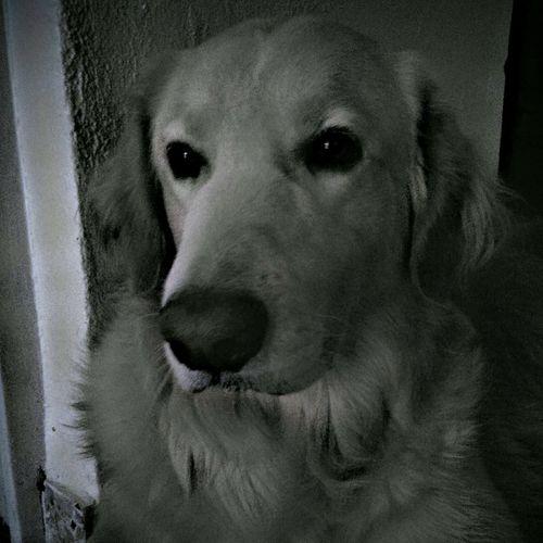 Max, My Dog