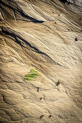 Full frame shot of plants growing on beach