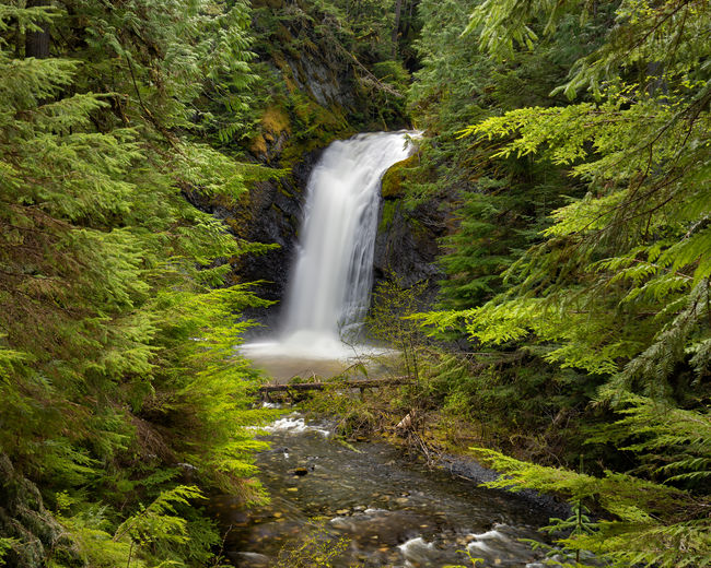 """Beaupre Falls in the Nisga'a Memorial Lava Bed Park (Anhluut'ukwsim Laxmihl Angwinga'asanskwhl Nisga'a). The park is included in the landmark treaty, the """"Nisga'a Final Agreement"""", between the Government of Canada and the Nisga'a Nation. Nisga'a Memorial Lava Bed Park is also the first provincial park to be jointly managed by a First Nation and BC Parks. Northern British Columbia, Canada Waterfall Motion Forest Scenics - Nature Long Exposure Water Beauty In Nature Blurred Motion Tree Land Flowing Water Green Color Environment Rock Rock - Object Nature Solid No People Power In Nature Outdoors Flowing Rainforest Falling Water Purity Beaupre Falls"""