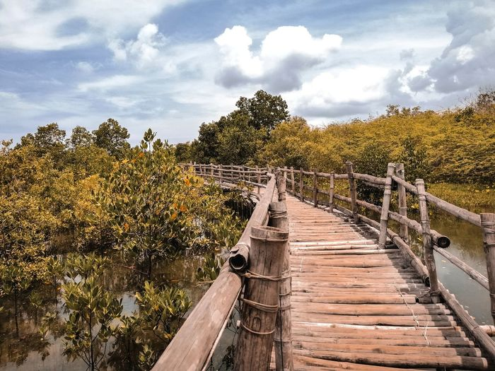 Pond Mangrove