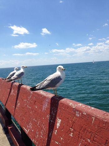 the three birdsketeers😁👍 Nature Photography Ocean View Ocean❤ Ocean Shores Bird Photography Birds First Eyeem Photo