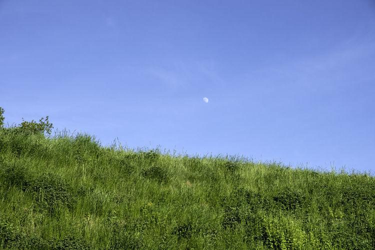 moon at daytime