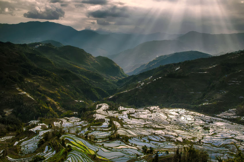 Rice terraced with sunset and ray of light Agriculture Nature Rays Of Light Rice Paddy Tourist World Heritage Beauty In Nature China Countryside Day Fields Landscape Layers Mountain Nature No People Outdoors Rice Terraces Rural Scene Scenics Sky Tranquil Scene Tranquility Travel Destinations Yunnan