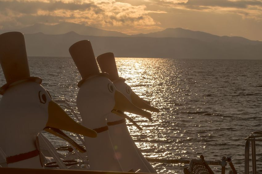 Duck staring at the sunset Hokkaido Lake Ship Boat Duck Love Date Sentimental Happy Lonley Family Japan Strange Sightseeing View Shikotsu Lake Wave Rear View Sunset Cloud - Sky Sunlight Travel Nature Leisure Activity Water