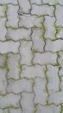 Greenery concrete walk way. Background Backgrounds Bricks Cement Close-up Concrete Block Concrete Floor Day Full Frame Grass Green High Angle View Masonry Material Nature Nature No People Outdoors Pattern Strong Will Survive Texture Textured  Urban Walk Path Adapted To The City