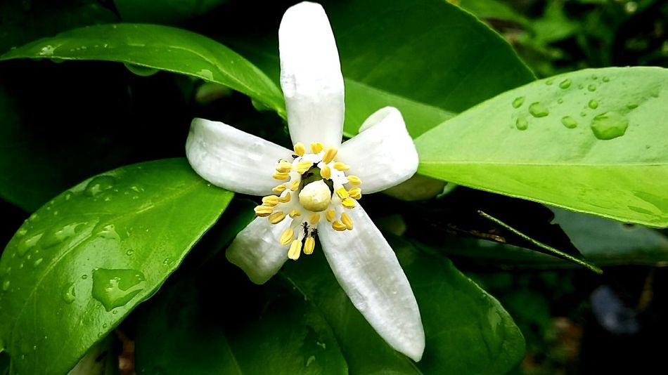 Flower sunkis editing Galaxidi Greece In Eyeem Outdoors