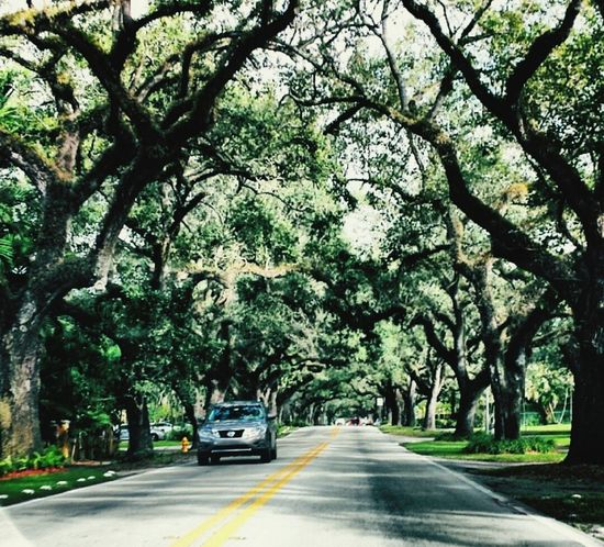 Understanding is a two way Street - EleanorRoosevelt Qotd Miami CoralGables For The Love Of Trees ~