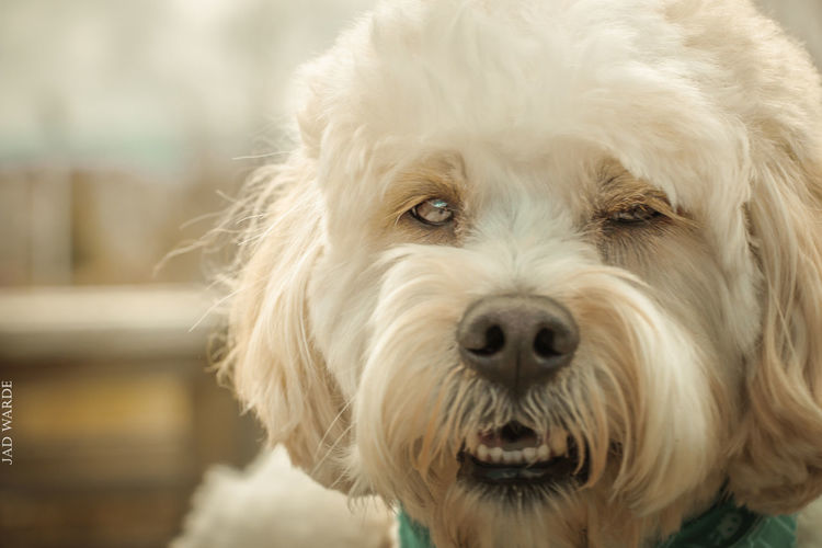 One Animal Dog Animal Themes Pets Mammal Portrait Looking At Camera Domestic Animals Focus On Foreground Animal Hair Close-up No People Day Nature Outdoors