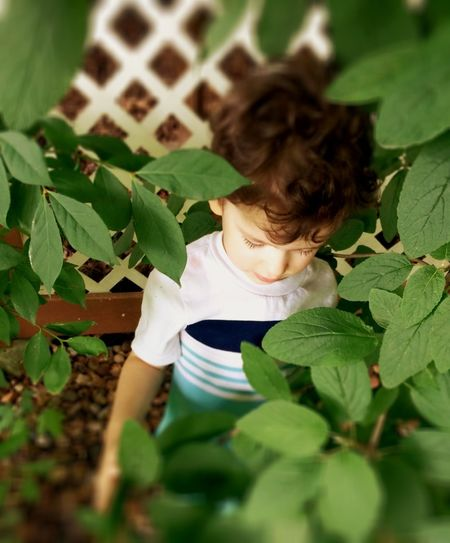 High angle view of boy amidst plants against fence in back yard