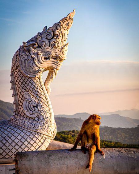 Lion statue of a temple