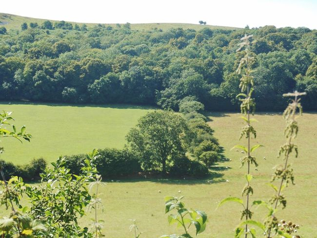 Old Railway Line Strawberry Line Countryside Walking