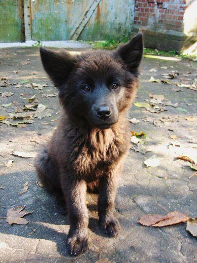 Pet Portraits Dog Wolfie Black Dog Autumn Cutie