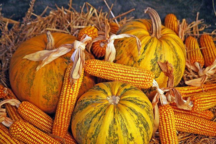 Close-Up Of Pumpkins And Corn Cobs