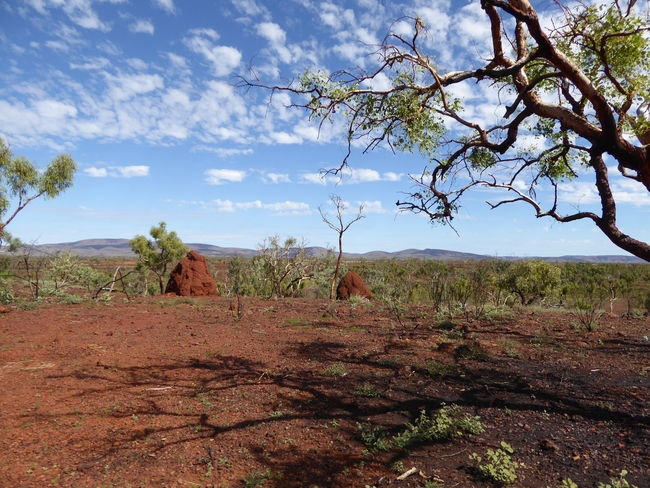 Australian Landscape Beauty In Nature Branch Day Gondwana Country Iron Ore Country Landscape Nature No People Outback Australia Red Earth County Scenics The Great Outdoors - 2017 EyeEm Awards Tourist Attraction  Tourist Destination Tranquil Scene Tranquility Tree