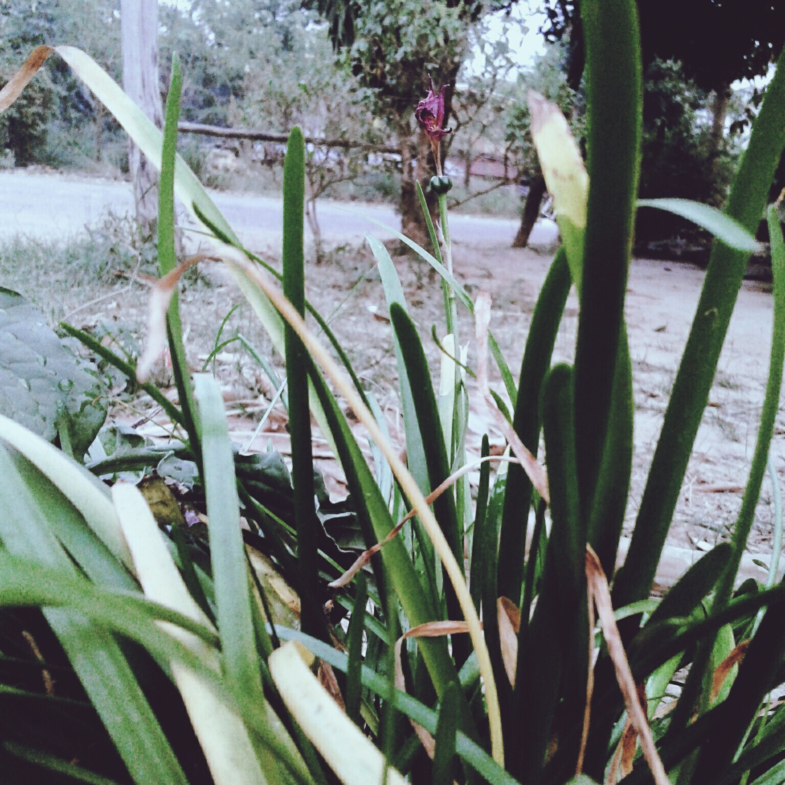 growth, plant, nature, flower, leaf, beauty in nature, green color, no people, day, outdoors, fragility, cactus, freshness, close-up