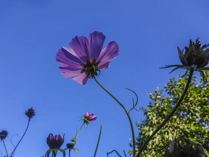 Autumn flowers Flowers Nature Petals Autumn Southsea Portsmouth England Flower Flower Head Blue Pink Color Sky Close-up