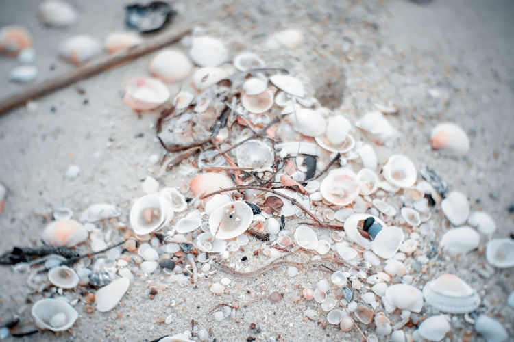 High angle view of shells on shore