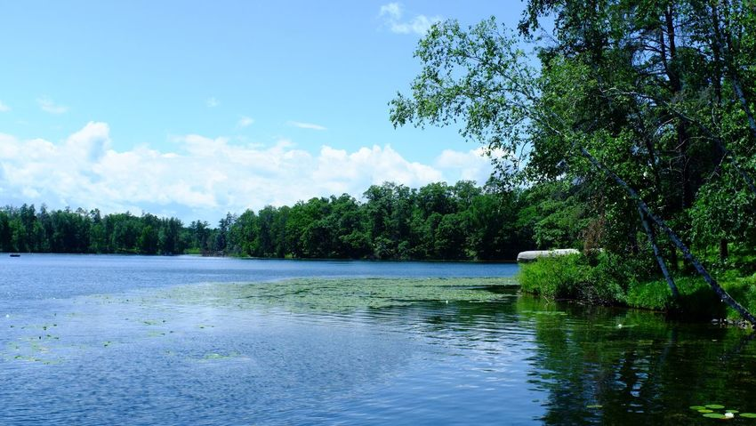 Lake Country Minnesota Beauty In Nature Cloud - Sky Day Forest Growth Lake Nature No People Outdoors Pequot Lakes Scenics Sky Tranquil Scene Tranquility Tree Water