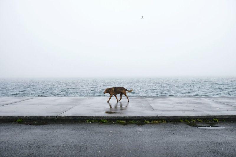 Dog Walking On Footpath By Sea Against Clear Sky